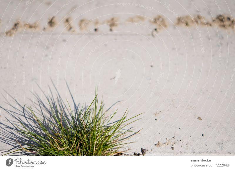 Plant Leaf Environment Grass Stone Power Concrete Growth Foliage plant Tuft Detail Tuft of grass Grass tip