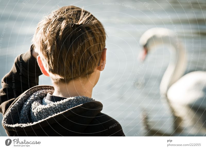 Human being Water Summer Animal Boy (child) Hair and hairstyles Head Lake Arm Masculine Ear Observe Shoulder Beautiful weather Beak Swan