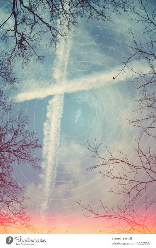 Nature Sky Tree Winter Clouds Sadness Heaven Line Hope Change Exceptional Sign Crucifix Worm's-eye view Belief Twig