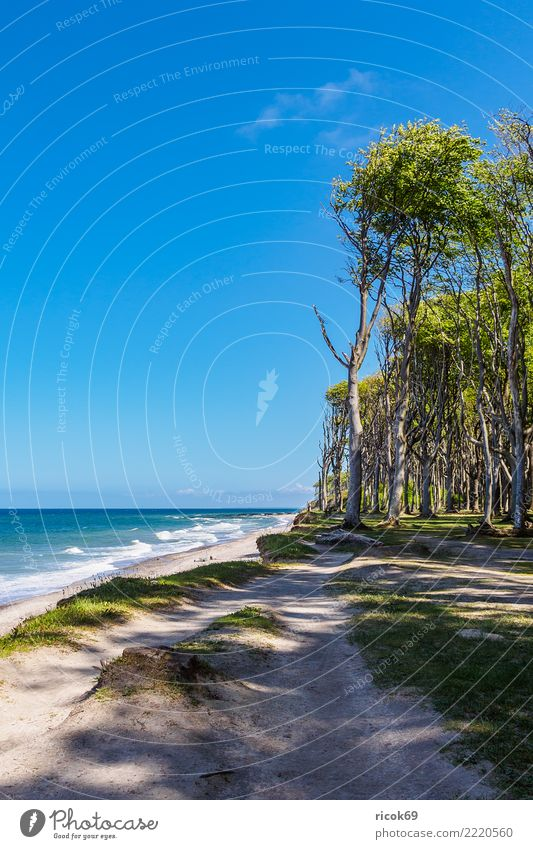 Coastal forest on the Baltic Sea coast near Nienhagen Relaxation Vacation & Travel Tourism Beach Ocean Nature Landscape Water Tree Forest Lanes & trails Blue