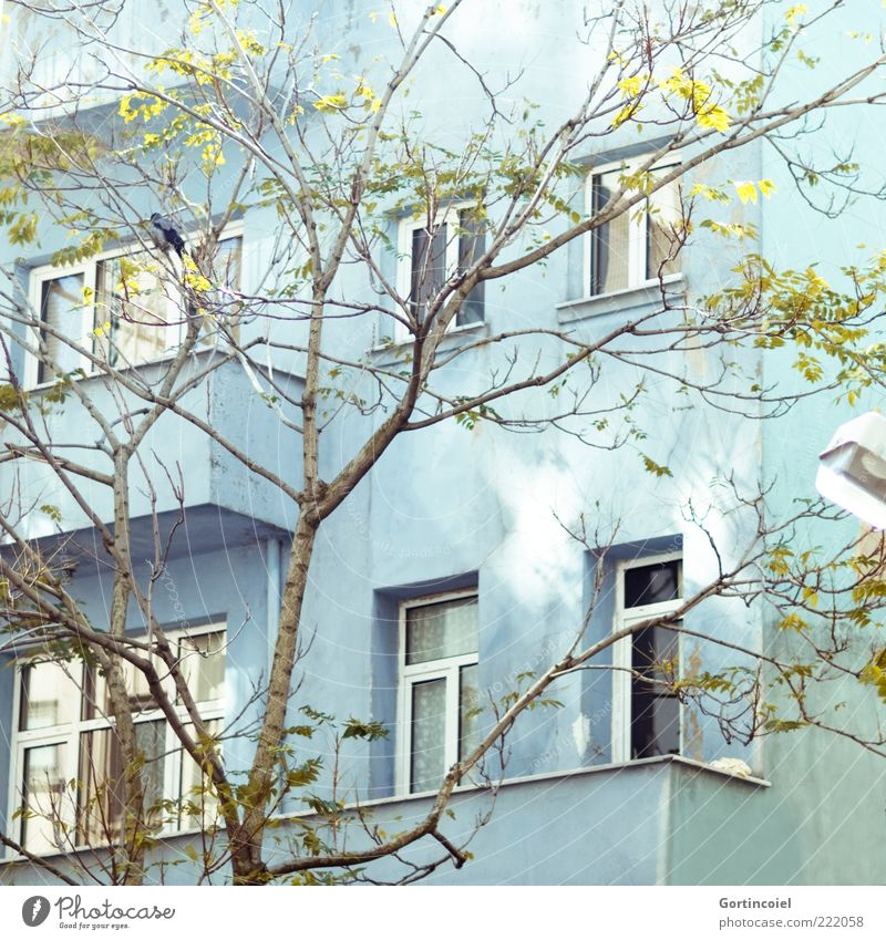 November sun Tree House (Residential Structure) Building Facade Balcony Window Bright Patch of light Turquoise Istanbul Turkey cihangir Colour photo