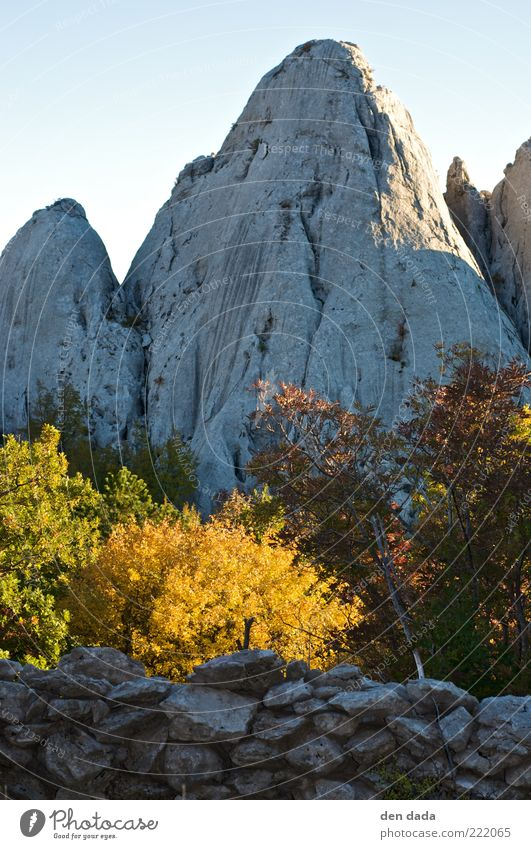 Nature Tree Plant Vacation & Travel Calm Life Relaxation Autumn Mountain Freedom Happy Landscape Contentment Rock Tall Fresh
