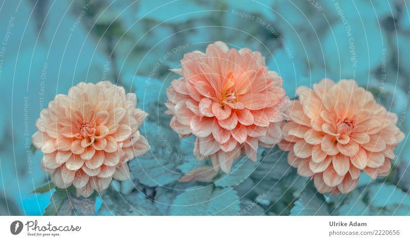 Three beauties Elegant Design Wellness Life Harmonious Well-being Contentment Relaxation Calm Meditation Arrange Decoration Wallpaper Thanksgiving Birthday
