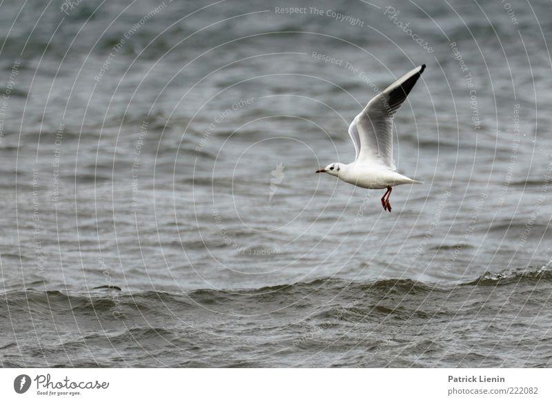 Nature Water Beautiful Ocean Animal Legs Moody Waves Environment Elegant Flying Wet Speed Esthetic Wing Observe
