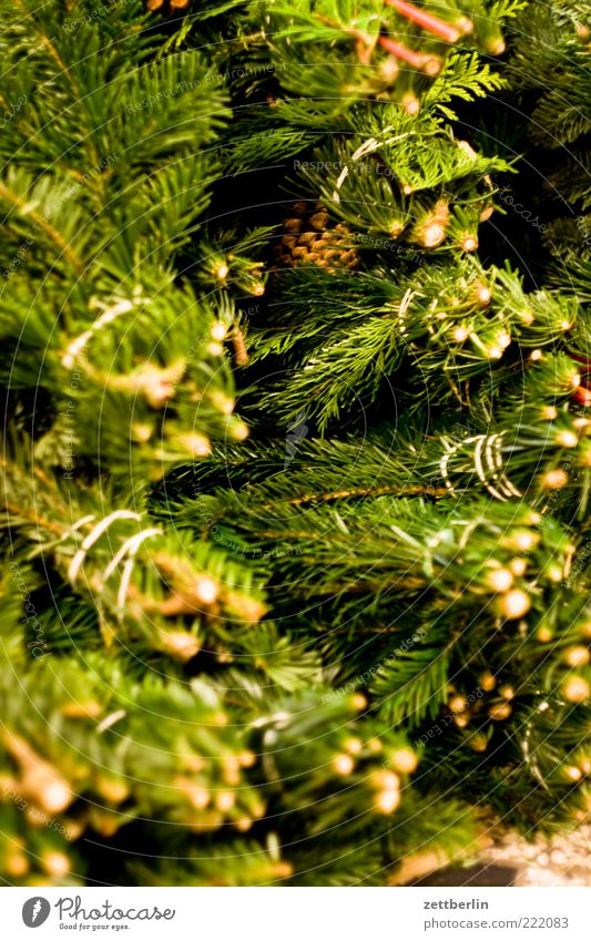 Plant Winter Wood Decoration Fir tree Christmas decoration Bundle Spruce Fir branch To dry up Christmas wreath
