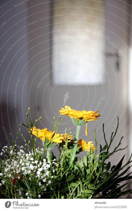 Many thanks for the flowers Flat (apartment) Decoration Room Living room Flower Bouquet Door Joie de vivre (Vitality) Colour photo Copy Space top Blur