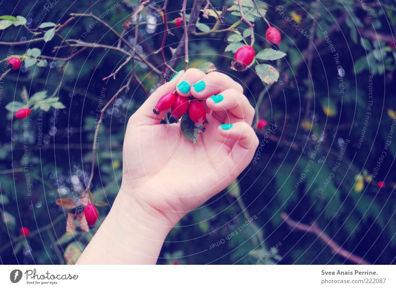 my nail polish is blue and yours? Lifestyle Style Feminine Young woman Youth (Young adults) Arm Hand Fingers Nature Plant Beautiful Blue Red Contentment
