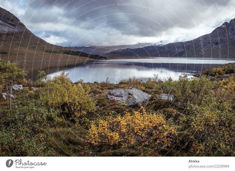 Fjord, dull, autumn landscape, Lofoten, Norway Landscape Clouds Autumn Bad weather Rain Bushes Mountain Lofotes Wet Yellow Gray Emotions Loneliness Uniqueness