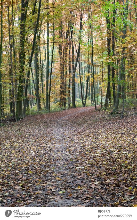 Nature Tree Green Plant Calm Leaf Yellow Forest Cold Autumn Wood Landscape Brown Environment Transience Footpath