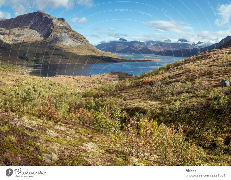 View into a fjord Vacation & Travel Adventure Far-off places Landscape Sunlight Autumn Beautiful weather Mountain Fjord Ocean Lofotes Exceptional Fantastic