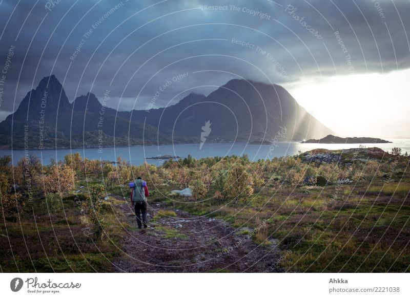 Threatening cloud wall, sun, hiker, fjord, autumn, Lofoten Young man Youth (Young adults) Clouds Sunrise Sunset Autumn Climate Climate change Bad weather Storm