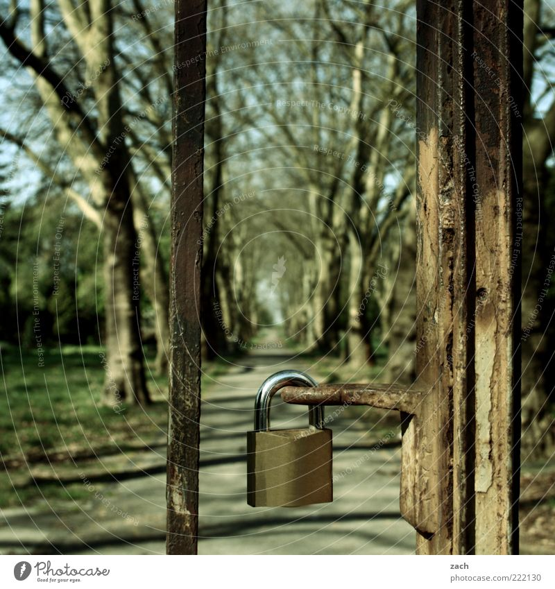 closed Nature Tree Park Meadow Gate Lanes & trails Padlock Steel Lock Old Mysterious Calm Rust Exterior shot Deserted Day Long shot Closed Barrier Promenade