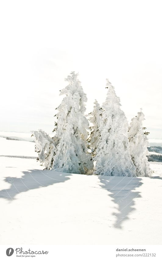 recently at the Feldberg Winter Snow Environment Nature Landscape Climate Beautiful weather Ice Frost Tree Hill Bright White Fir tree Black Forest