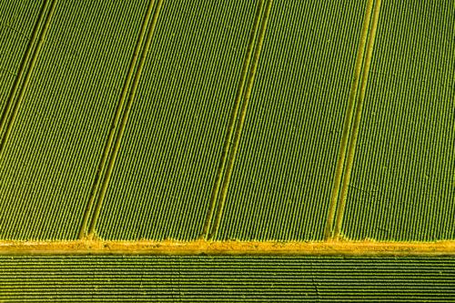 field Agriculture Forestry Trade Environment Nature Landscape Field Farm animal Green Farmer Monoculture Arrangement Commercial Agricultural crop Ecological