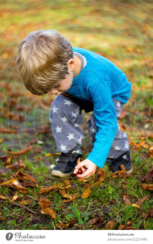Child collects chestnuts Nature Autumn Boy (child) 3 - 8 years Exterior shot Autumnal Chestnut tree Environment Beautiful weather Infancy Playing amass