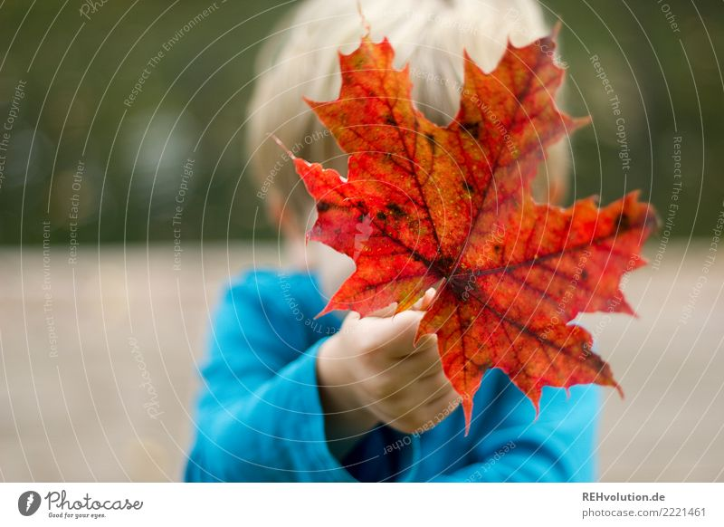 Child holds an autumn leaf Human being Masculine 1 3 - 8 years Infancy Environment Nature Autumn Leaf Autumn leaves To hold on Natural Red Joy Happy Transience