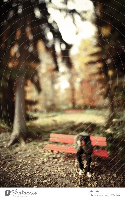 Human being Man Nature Loneliness Adults Forest Autumn Emotions Sadness Park Sit Wait Poverty Masculine Beautiful weather Pain
