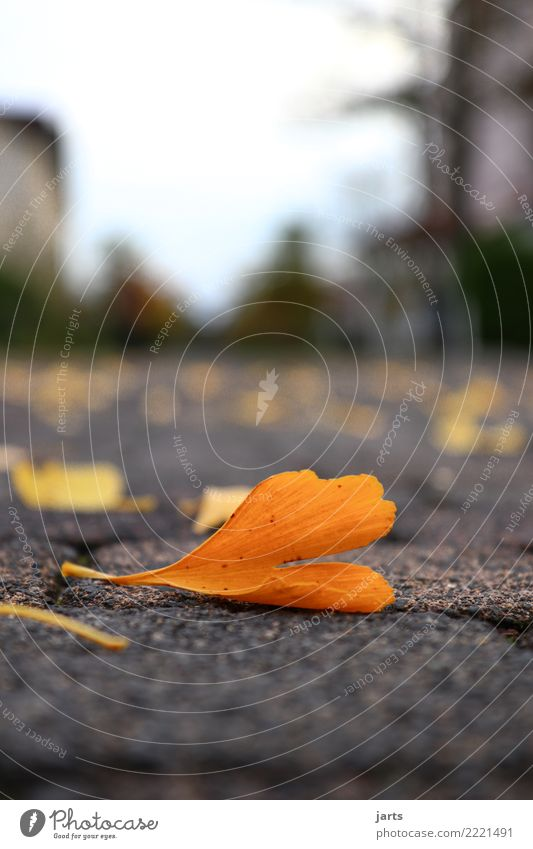on the ground Autumn Leaf Town Street Lanes & trails Lie Natural Emotions Nature Paving stone Colour photo Exterior shot Close-up Deserted Copy Space top