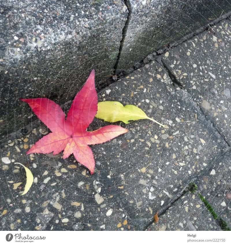 Nature Beautiful Old Plant Red Calm Leaf Yellow Street Autumn Gray Stone Moody Environment Esthetic Gloomy