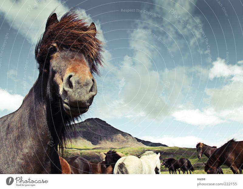 Sky Nature Clouds Animal Landscape Mountain Moody Wind Wait Natural Wild Esthetic Wild animal Stand Horse Animal face