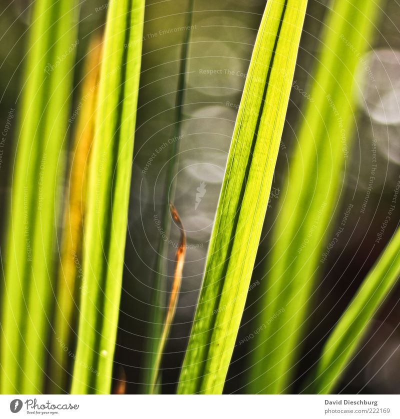 Nature Plant Dark Grass Gray Bright Line Circle Depth of field Blade of grass Section of image Partially visible Summery Foliage plant Leaf green Photosynthesis