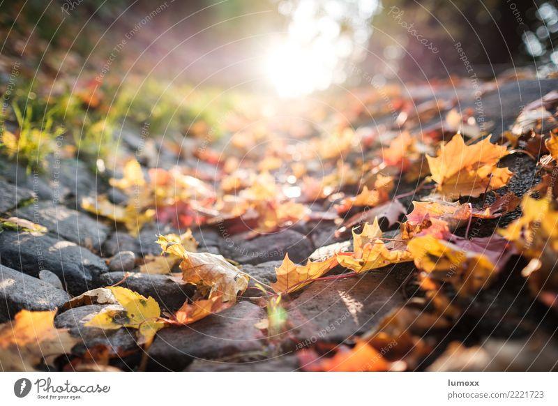 autumn is okay Nature Sunlight Autumn Leaf Street Brown Yellow Gray Green Graz Autumn leaves Roadside Back-light Sunset Paving stone Colour photo Deserted Day