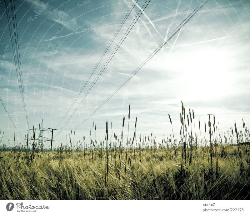 [99] lined Energy industry Landscape Sky Sun Grass Agricultural crop Field Grain field High voltage power line Electricity pylon Vapor trail Colour photo