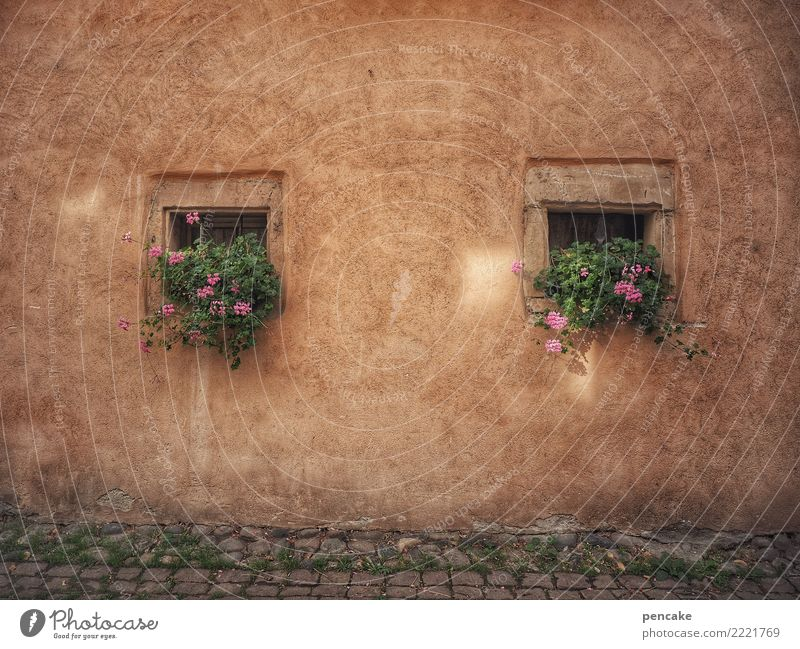 square root of two Plant Old town House (Residential Structure) Architecture Facade Window Contentment Idyll Tradition Town Past Transience Square Geranium