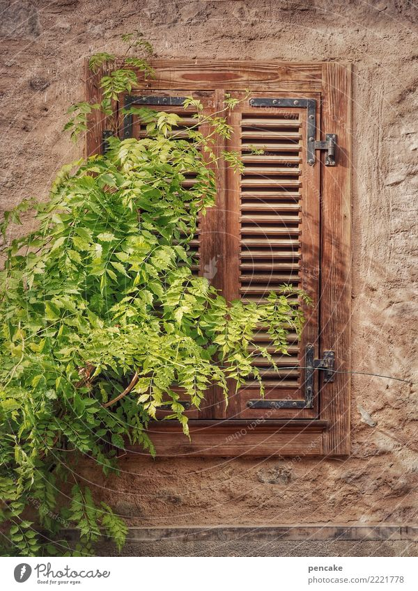 just stay down for a while Plant Tree Village Old town Facade Window Shutter Closed Foliage plant Sleep Alsace Calm Colour photo Exterior shot Detail Pattern