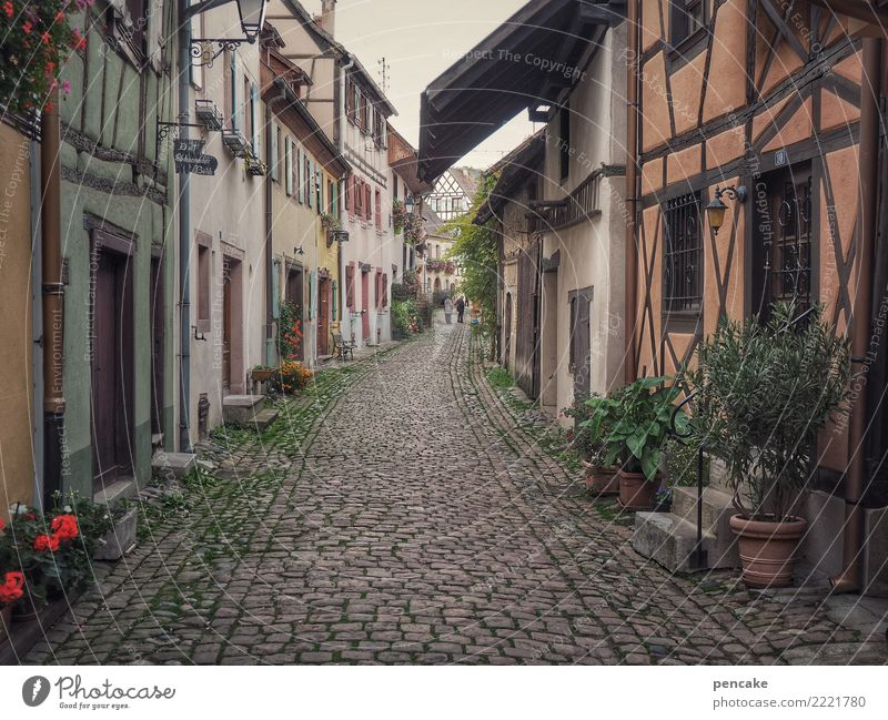 mutable eguisheim France Village Old town House (Residential Structure) Architecture Movement Discover Relaxation Vacation & Travel Idyll Half-timbered house