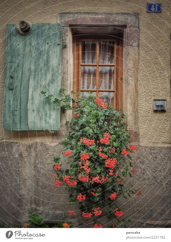 Old Plant Town House (Residential Structure) Window Warmth Wall (building) Wall (barrier) Growth Authentic Cute Friendliness Old town Near Shutter Pot plant