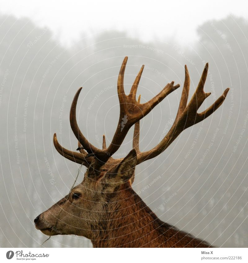 Animal Head Fog Large Wild animal Antlers Pride Deer Light Deer head
