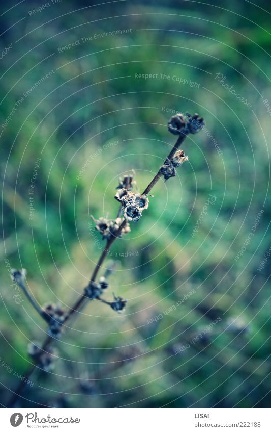 untitled Nature Plant Autumn Grass Bushes Meadow Brown Green Black Colour photo Exterior shot Close-up Detail Deserted Copy Space top Shallow depth of field