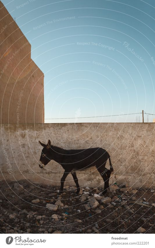 Loneliness Animal Wall (barrier) Going Poverty Hiking Facade Gloomy Break Stand Africa Hide Blue sky Backyard Beautiful weather Donkey