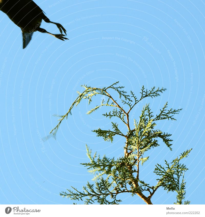 Sky Nature Green Blue Plant Animal Freedom Movement Environment Bird Fear Going Animal foot Flying Natural