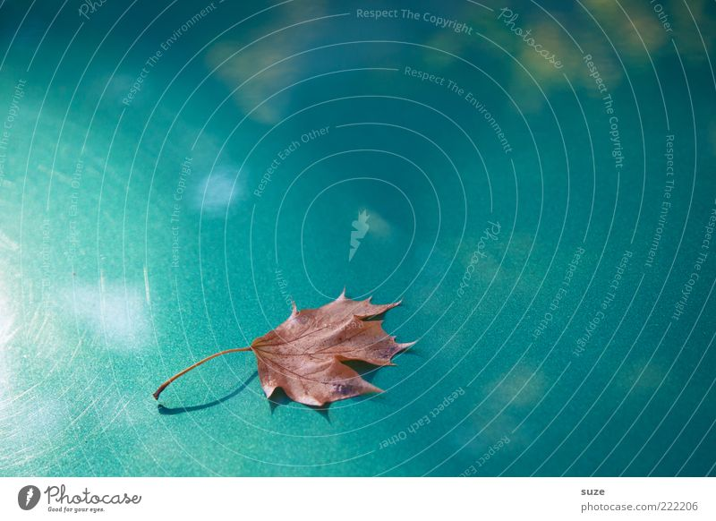 Nature Beautiful Plant Loneliness Leaf Autumn Time Weather Exceptional Glittering Esthetic Individual Seasons Turquoise Autumn leaves Autumnal
