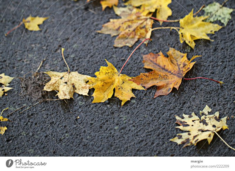 Schmuddel - Autumn Environment Nature Weather Bad weather Plant Leaf Foliage plant Street Asphalt Rain Multicoloured Sadness Old Dirty Wet Yellow Moody Grief