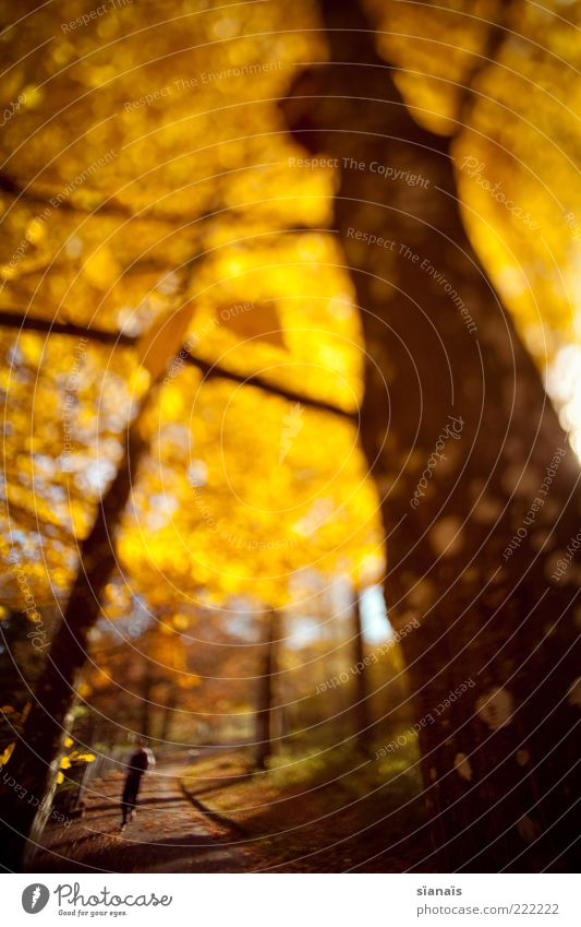Human being Nature Tree Plant Autumn Life Environment Lanes & trails Park Gold Masculine Illuminate To go for a walk Idyll Switzerland Zoo