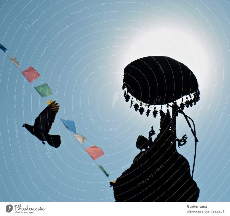 Sky Sun Animal Freedom Bird Flying Esthetic Peace Asia Wing Illuminate Sunshade Pigeon Beautiful weather Umbrellas & Shades Light