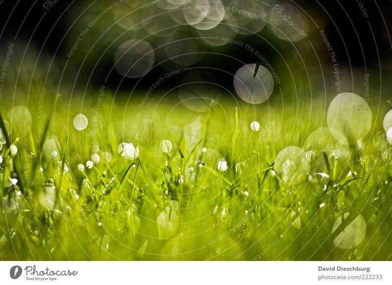 drop panorama Nature Plant Water Drops of water Summer Beautiful weather Grass Meadow Green Dew Wet Damp Circle Growth Glare effect Glittering Fresh