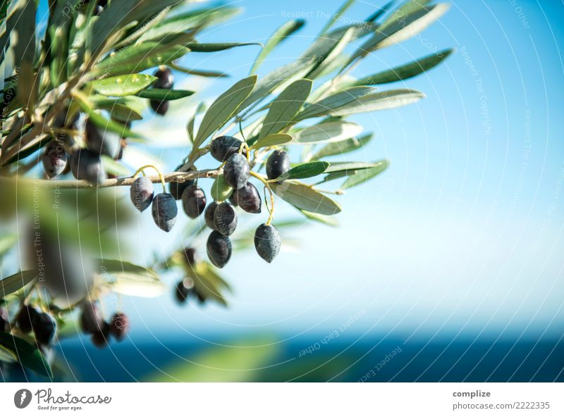 Olive tree at the Mediterranean Sea Food Cooking oil Olive oil Nutrition Organic produce Italian Food Healthy Healthy Eating Wellness Harmonious Meditation