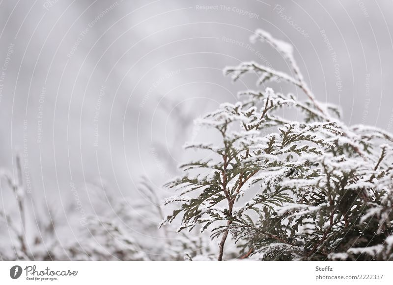 winter branches Nature Plant Winter Weather Fog Ice Frost Snow Snowfall Foliage plant Twig Twigs and branches Hedge Freeze Cold Gloomy Gray White Winter mood
