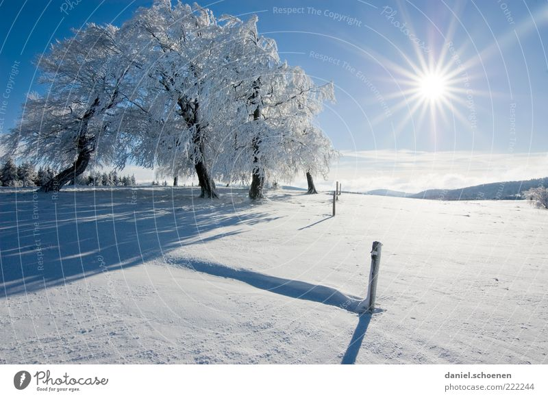 ;-) Vacation & Travel Winter Snow Winter vacation Mountain Environment Nature Landscape Cloudless sky Climate Beautiful weather Ice Frost Tree Hill Bright Blue