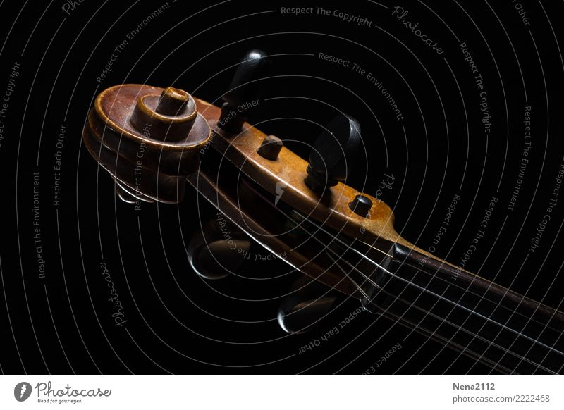Violin 03 Art Music Listen to music Concert Outdoor festival Stage Opera Band Musician Orchestra Cello Make music Wood Crumpet Swirl String instrument