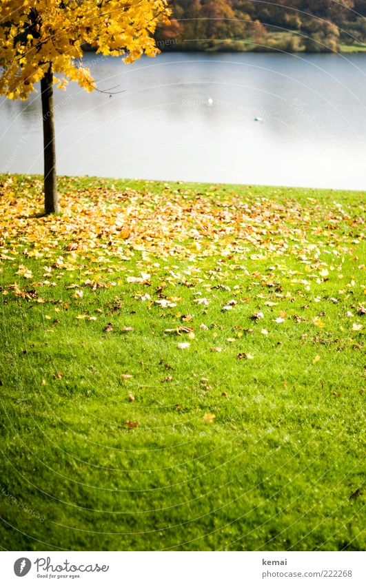 Nature Water Tree Green Plant Leaf Yellow Meadow Autumn Grass Lake Park Landscape Bright Environment Wet