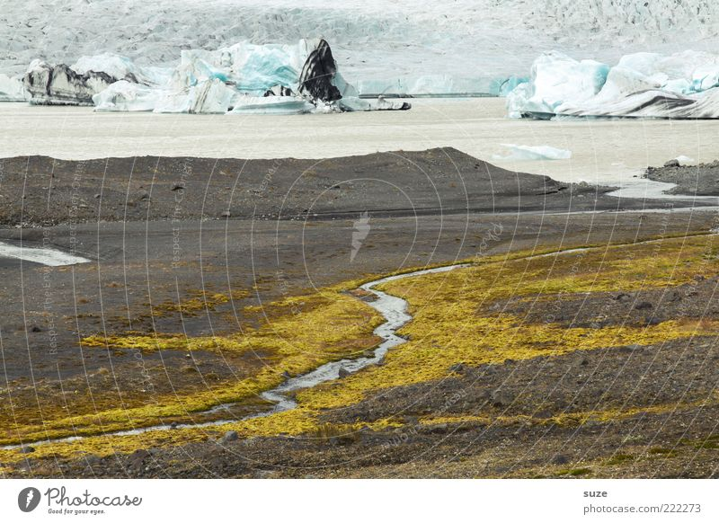 Nature Water Landscape Environment Far-off places Snow Coast Ice Exceptional Earth Climate Authentic River Lakeside Iceland Moss