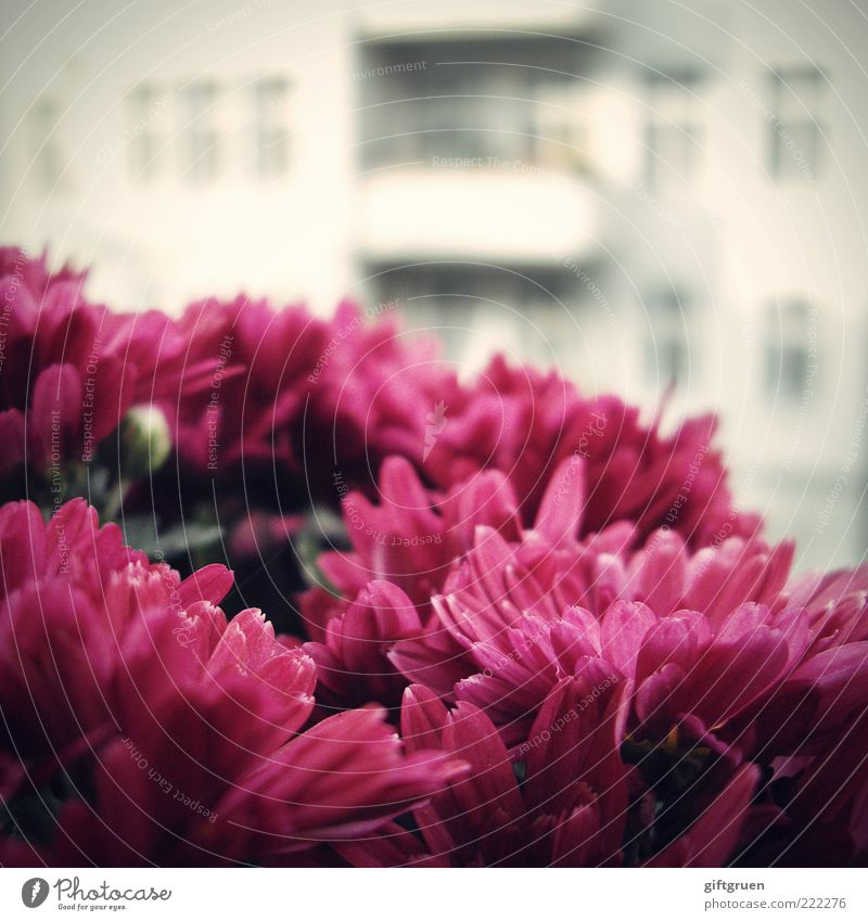 Plant Flower Summer House (Residential Structure) Wall (building) Window Blossom Wall (barrier) Building Facade Fresh Growth Violet Blossoming Balcony Vantage point