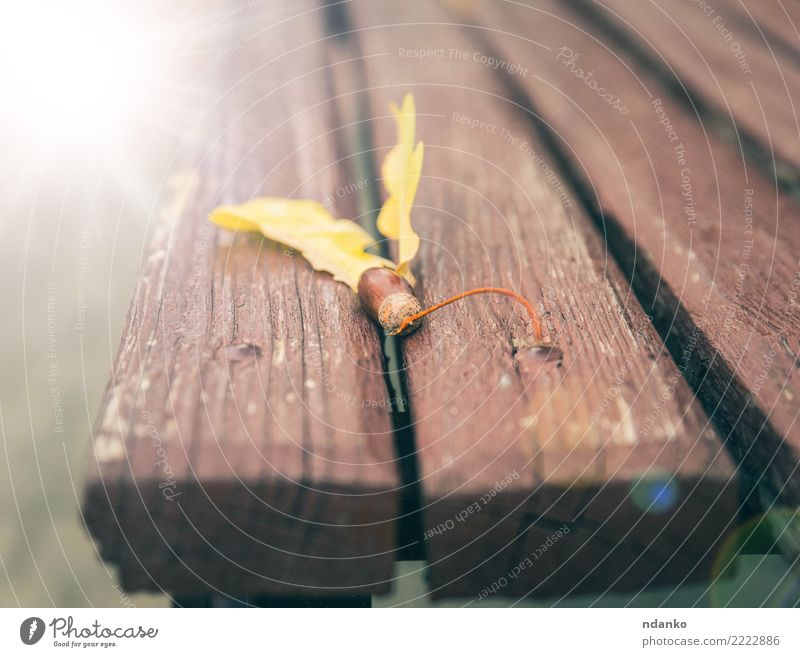 acorn on a brown bench Autumn Leaf Park Wood Brown Yellow Idea Nostalgia Acorn Bench Ray Colour photo Close-up Deserted Day
