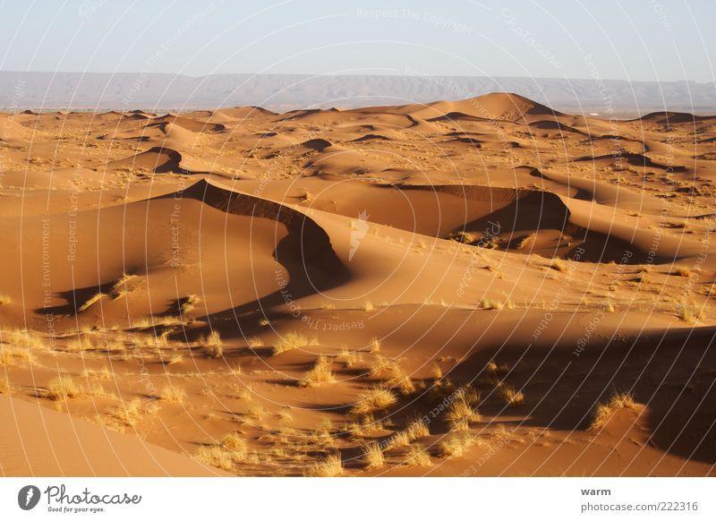 Nature Calm Far-off places Yellow Grass Freedom Sand Landscape Warmth Gold Earth Desert Hot Serene Beach dune Wanderlust