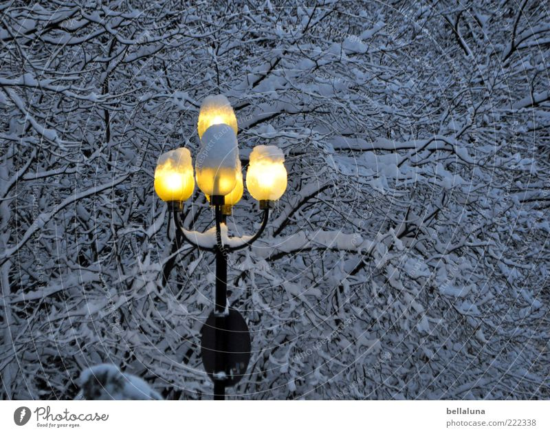 I bring light into the darkness! Nature Winter Ice Frost Snow Tree Cold Lantern Lamp Colour photo Subdued colour Exterior shot Evening Twilight Night Deserted